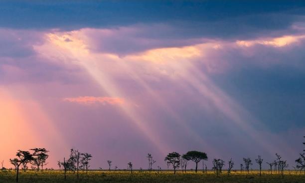 世界上竟有长满山羊的树,非洲的第一条高铁就在这里