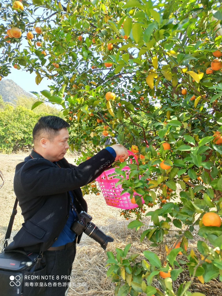 冬日微寒,清新温暖,广东又一靓水果上市了。首日签售6000吨!