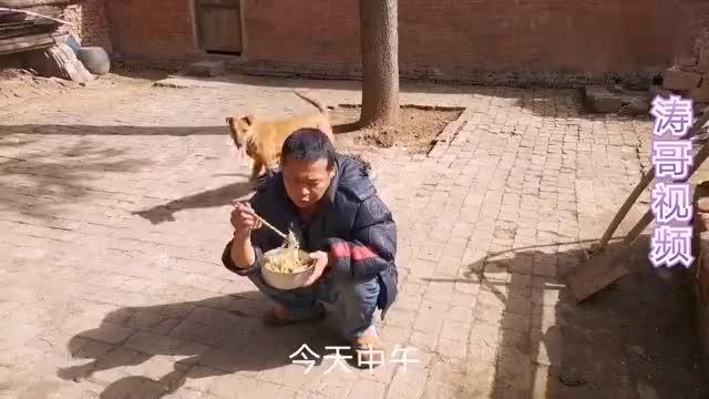 河南乡下小伙喂养了4个月的小狼狗这是啥品种有朋友知道吗