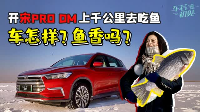 初晓敏:开宋Pro DM 上千公里去吃鱼 车怎样?鱼香吗?