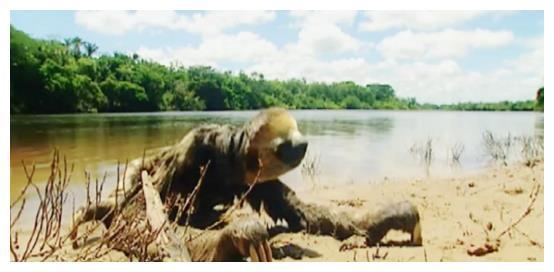 河边惊现奇怪生物,行动缓慢有气无力,老人惊呼:这是灾物