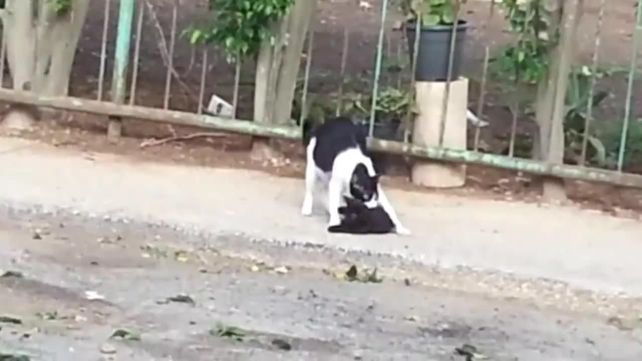 小奶猫不肯回家,猫妈妈只好叼着它,一步一步拖回家了