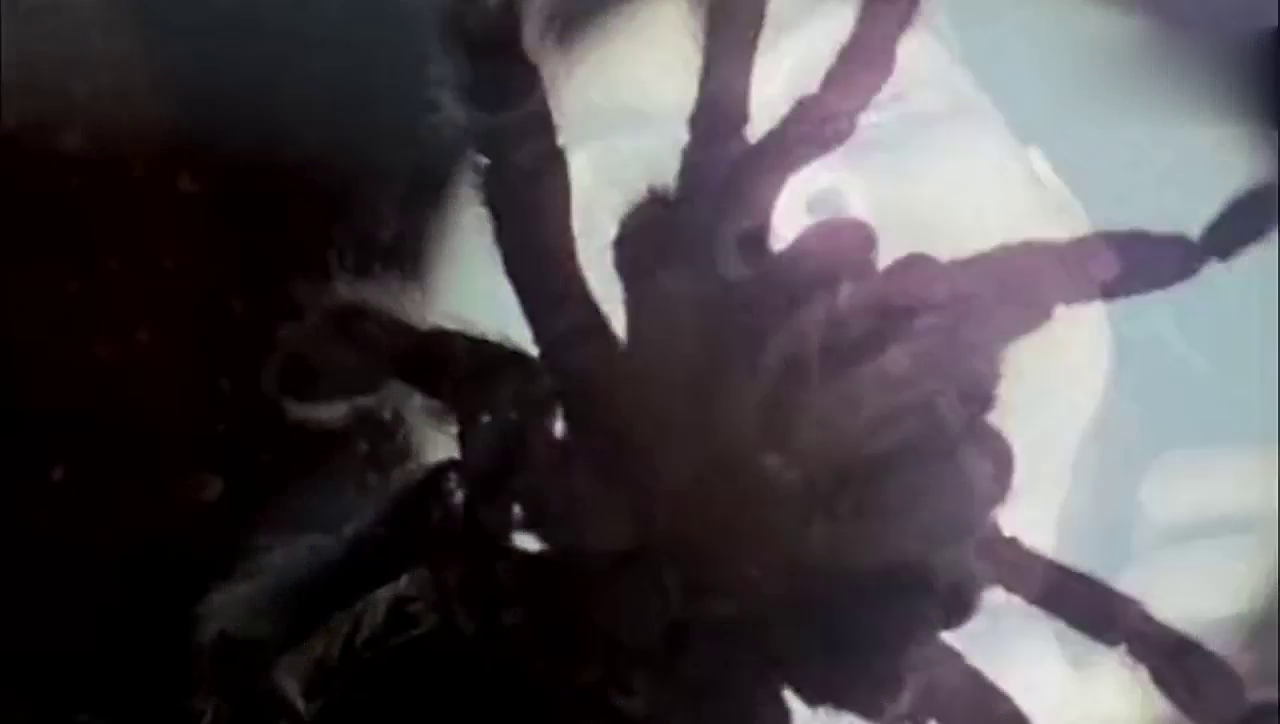 漫威英雄:彼得帕克被蜘蛛咬后,眼睛不近视,还长肌肉了!
