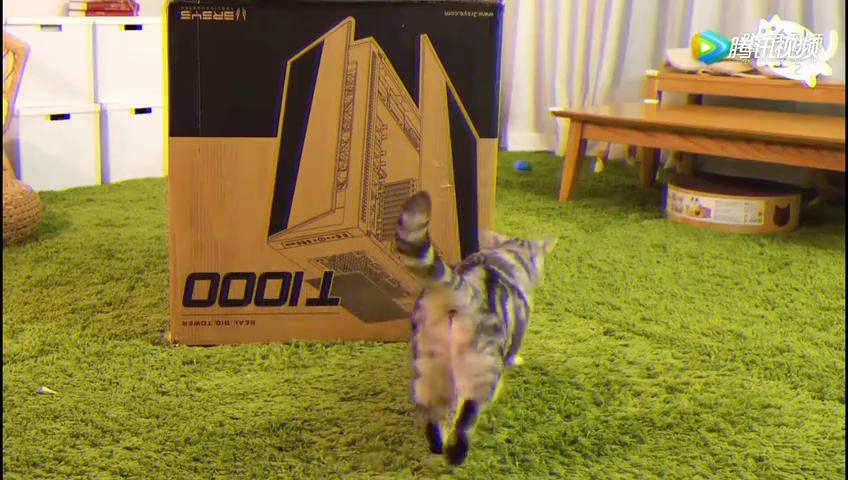 萌宠幽默收获巨型纸箱,全部的喵星人都好奇的来看热闹