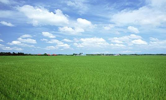 水稻主要在长江以南种植,为何买的米东北为主?南方大米都哪去了