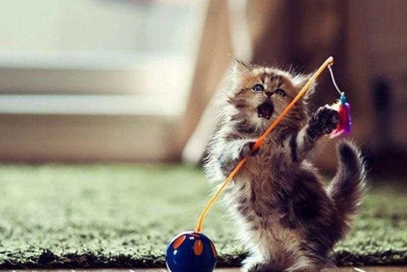 毛发亮亮的猫咪,想看看吗,一起了解
