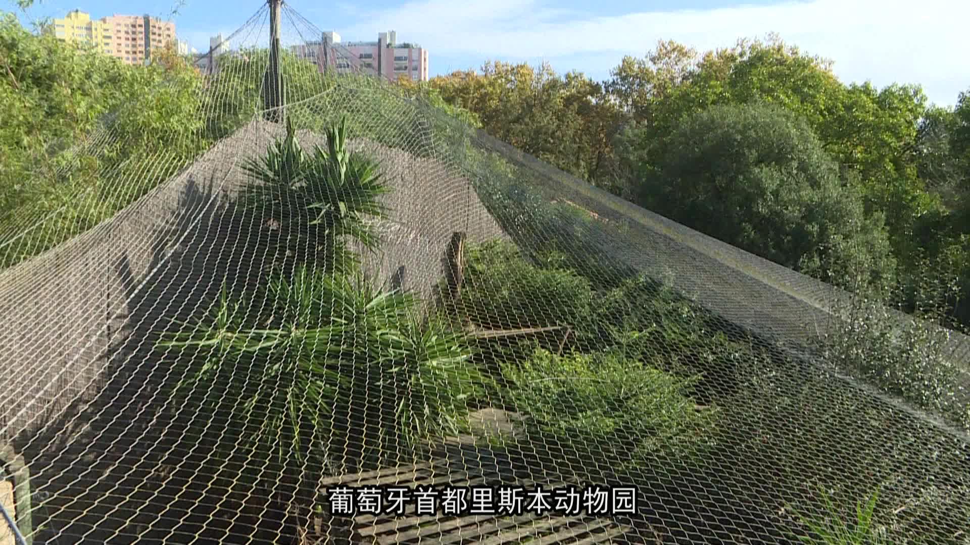 濒危物种波斯豹亮相里斯本动物园