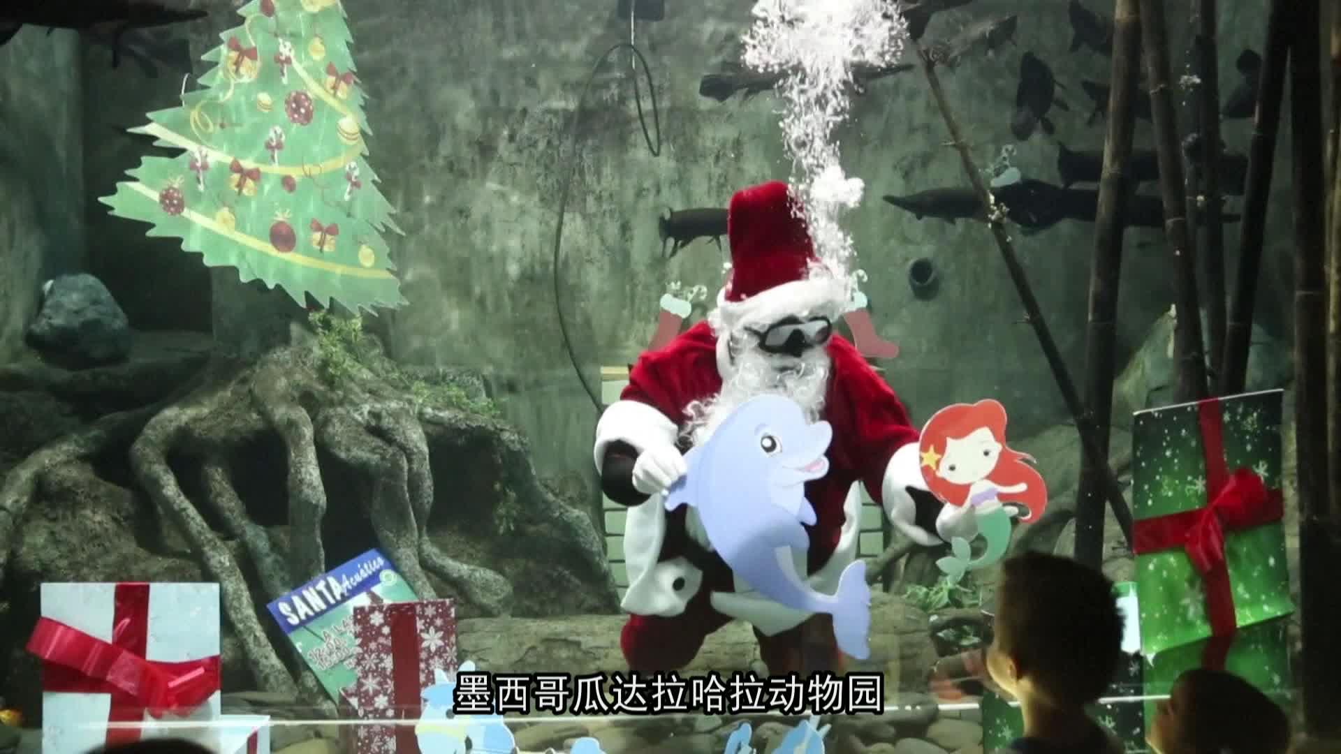 墨西哥动物园 圣诞老人水底庆祝圣诞