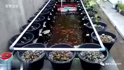 鱼菜共生专用连栋薄膜温室