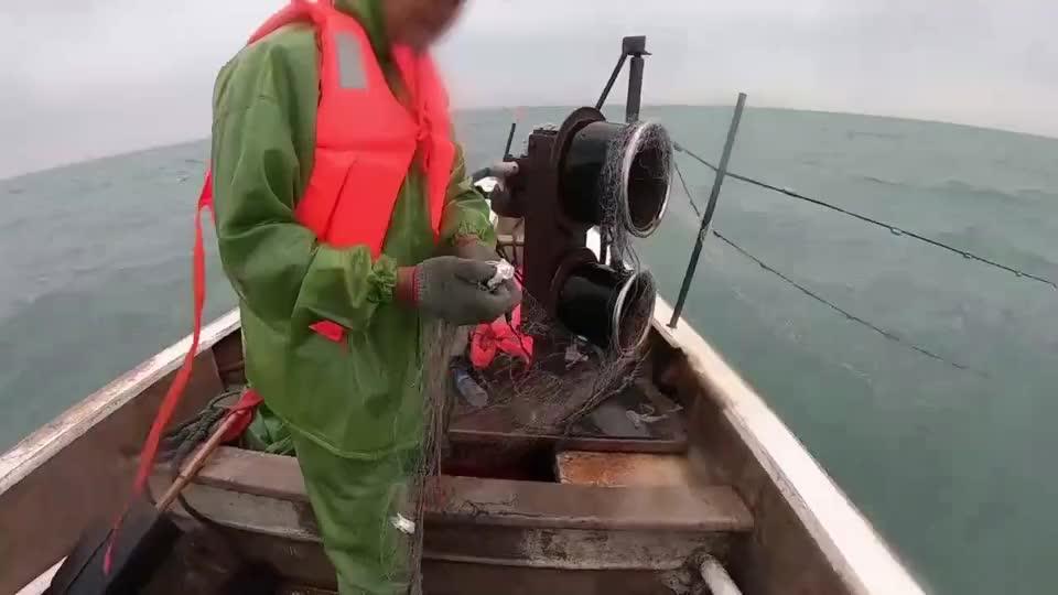 大叔顶着10级大风拉网赶海,喜提11斤大虾和20斤水古鱼,卖