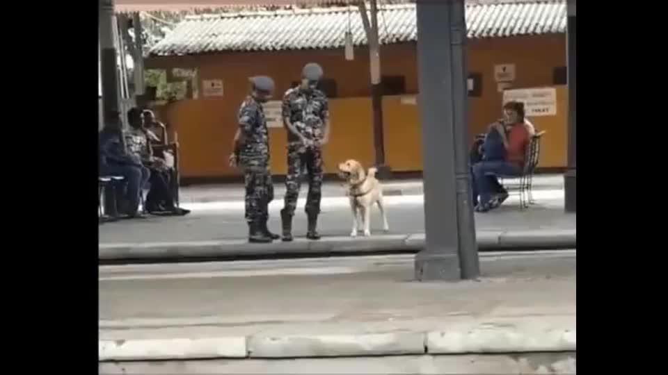 狗长官我可以请假玩会吗好给你1分钟