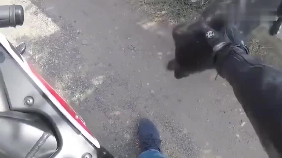 流浪狗向路人求救给骑摩托小伙带路没想是去喂4只小奶狗