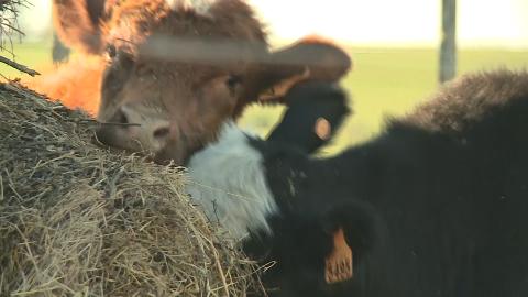 乌拉圭畜牧业的发展