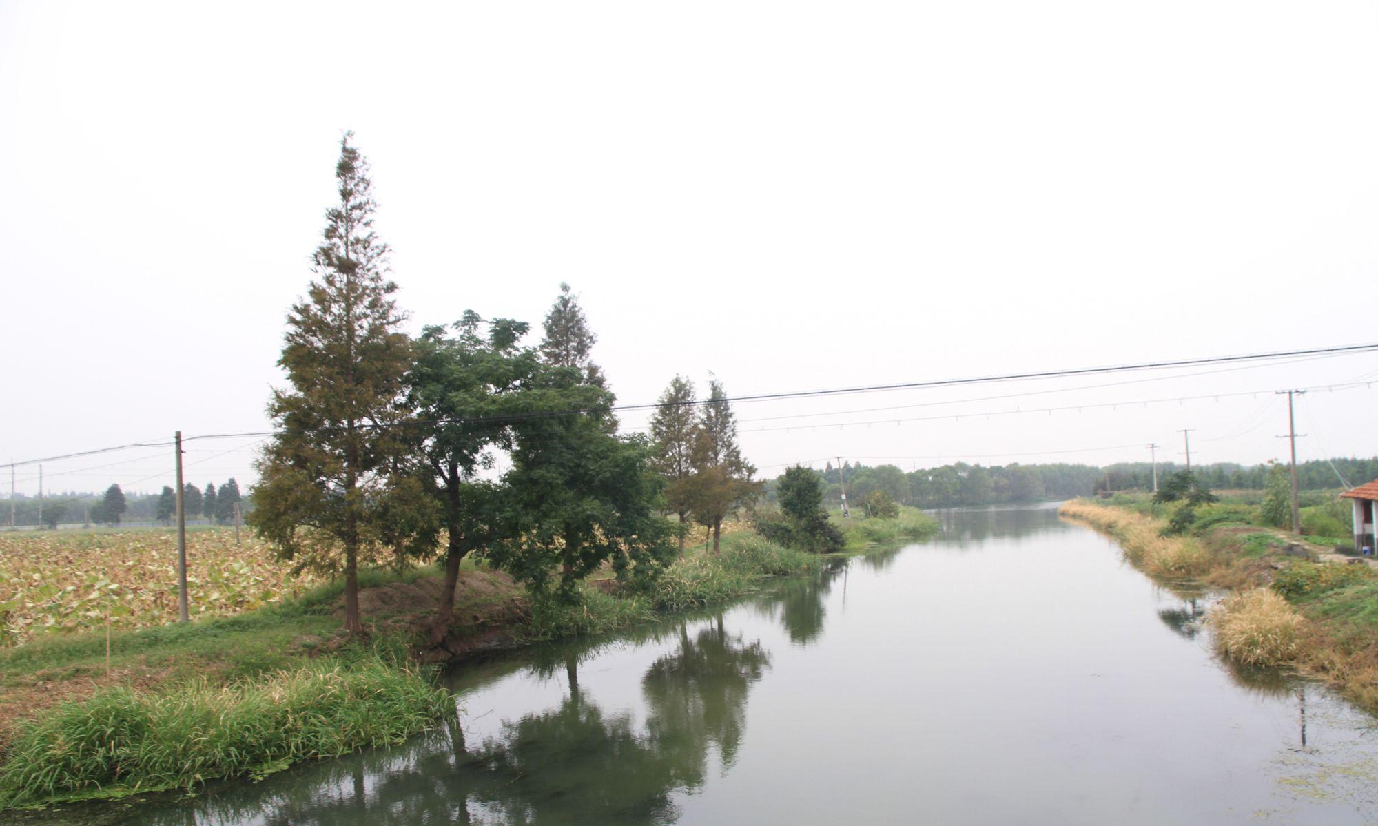 走在上海青西郊野公园内,乡野景观恰是人在一幅幅江南水墨画中行