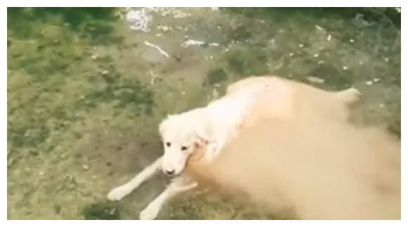 液体猫咪见过不少,液态狗狗见过没有?还有各种融化的动物超搞笑