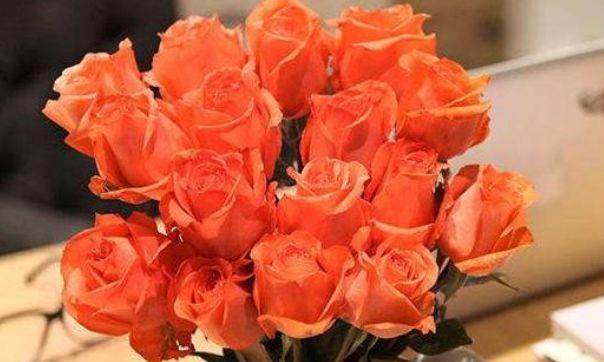 """客厅养花,就养""""精品玫瑰""""影星,花开美如佳人,窈窕美丽"""