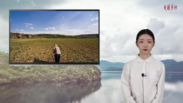 农业农村部:《农村土地经营权流转管理办法》,明年1月1日施行