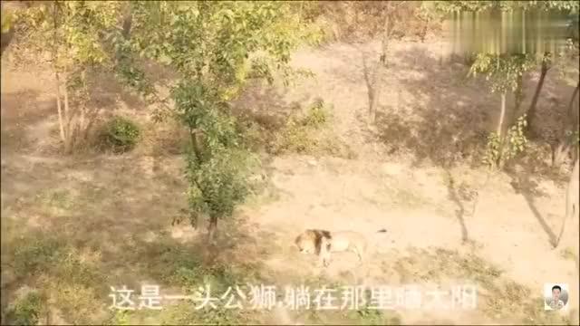 青岛野生动物园的大黑熊突然站了起来,吓坏了小宝宝