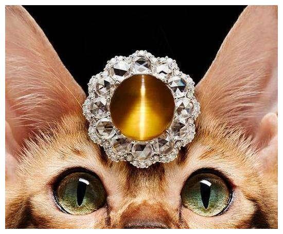 【世间宝】猫眼石和猫咪有什么关系?
