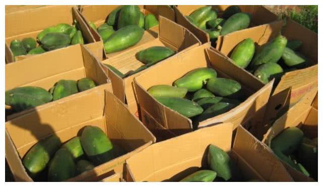 """南方特有一种水果,种子如珍珠,味道堪比牛奶人称""""乳瓜"""""""