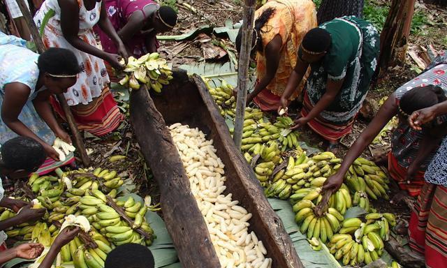 """非洲人自酿""""香蕉啤酒"""",5块钱随便喝,网友:免费也喝不下!"""