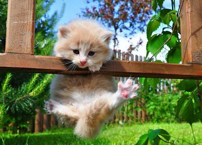 毛发亮亮的猫咪,想看看吗,一起观看