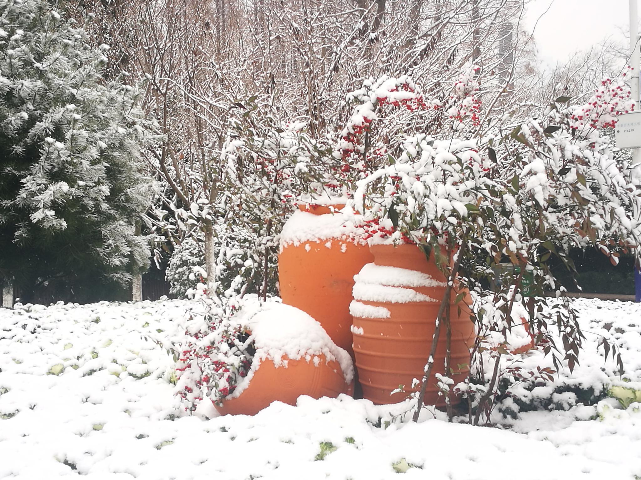 雪中的花坛