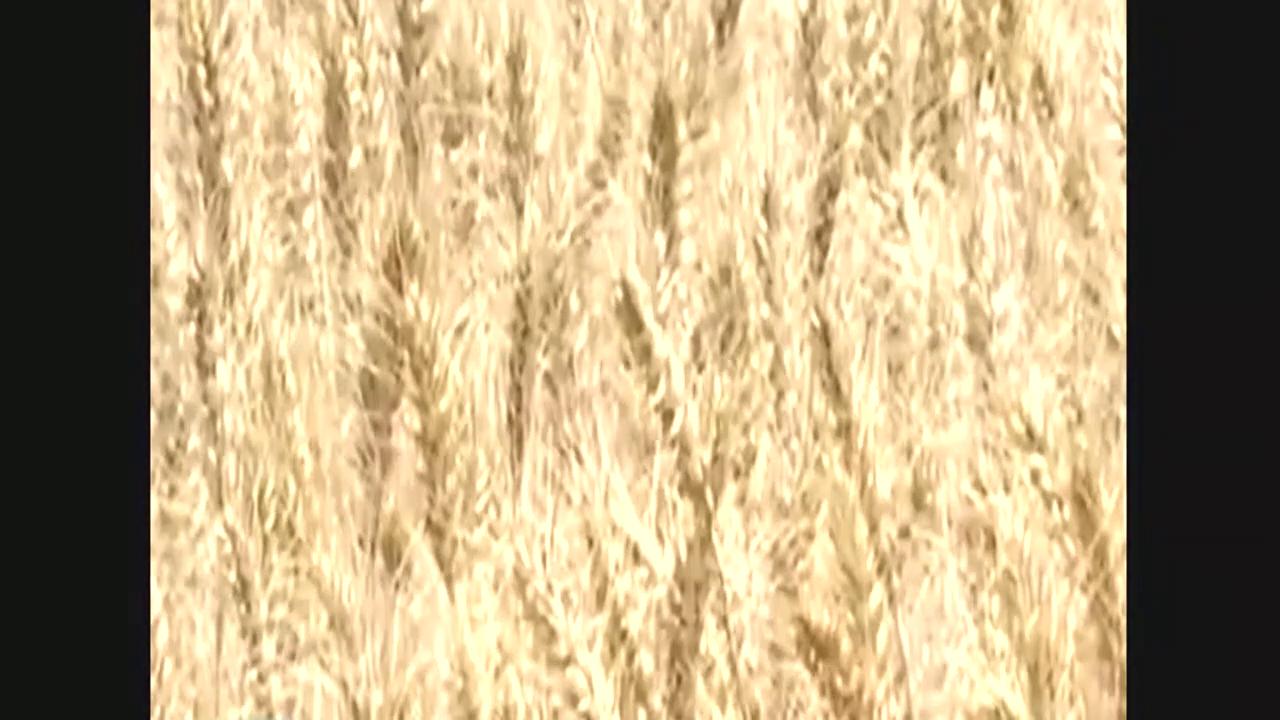 看看国产的大农业,300台联合收割机,三天抢收20万亩小麦