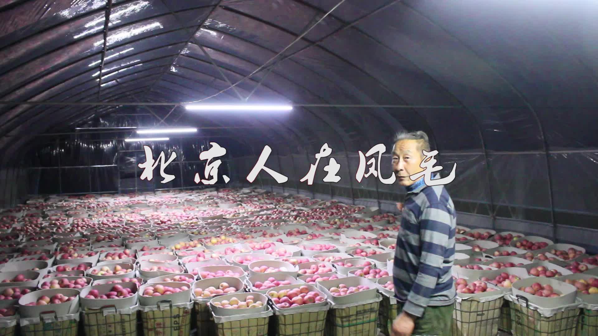 新果农的果园完成第一轮采摘,700个筐还不够用,场面真壮观