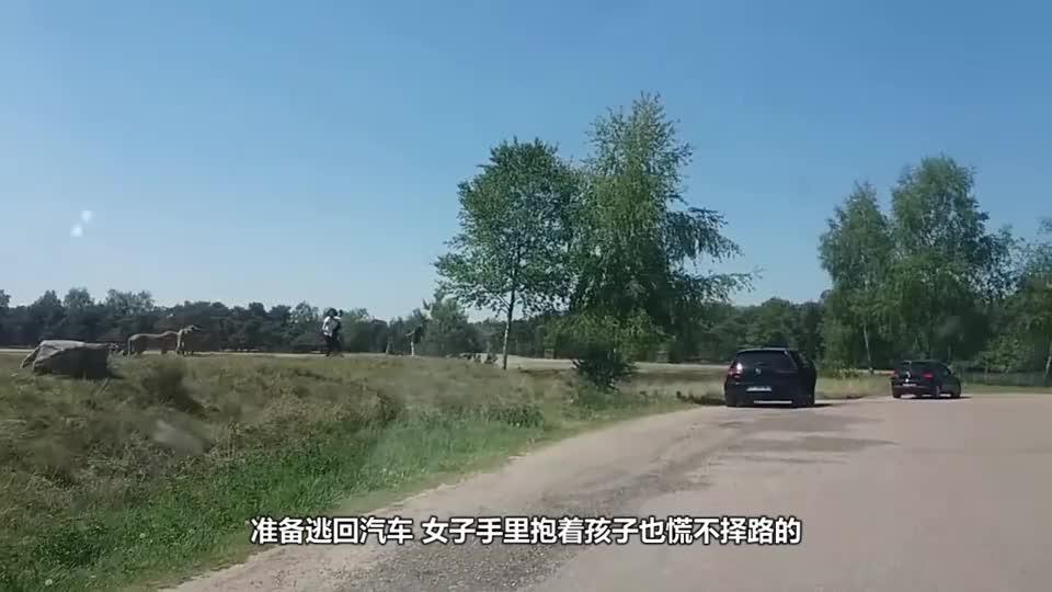 太刺激了!一家三口在野生动物园玩,下车拍照遭遇豹子袭击