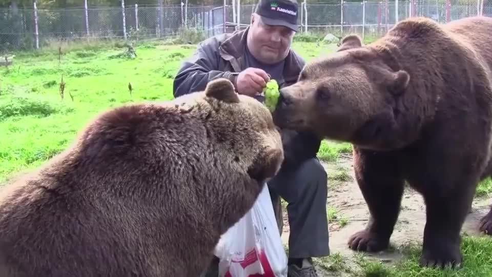 男子收养了两头棕熊再次相见已白发苍苍但棕熊一眼就认出他
