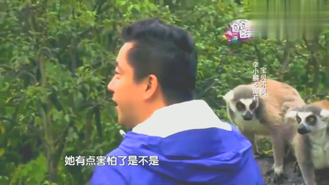 调皮狐猴跳上李小鹏肩膀和奥莉对视,把小萌神吓得失声痛哭