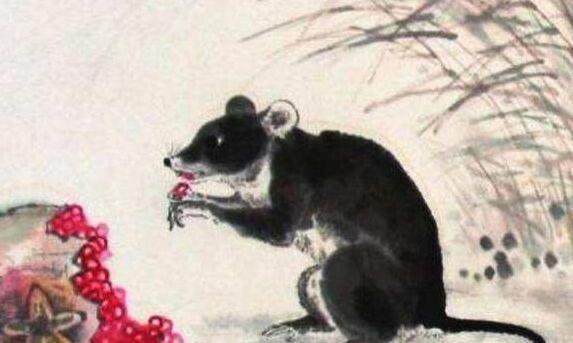 """生肖鼠:出生在几个月的鼠人""""最好命"""",老人说的没错!"""