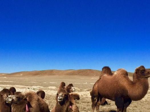 新疆境内,留下了古丝绸之路大量珍贵历史遗存,是人类的宝贵遗产