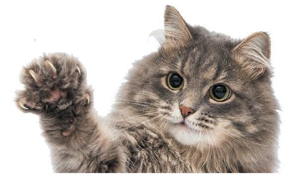 知道猫为什么挠你吗?那是你不会和猫玩,都是学问啊
