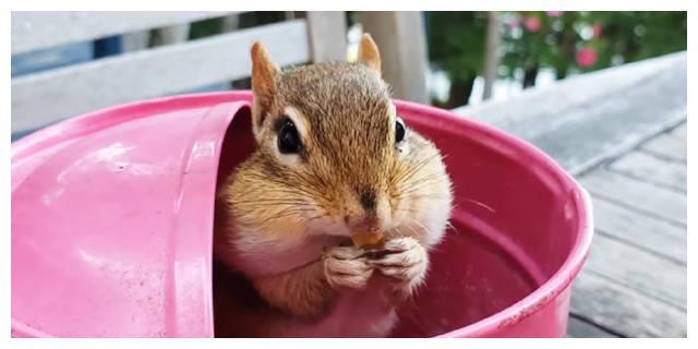 像小松鼠一样腮帮子鼓鼓进食的钟仁,可爱到心脏阿啪