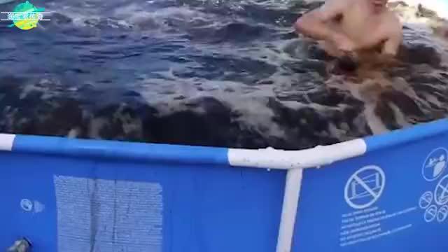 重达2048斤的浴盐球推入泳池会怎样视觉效果太刺激