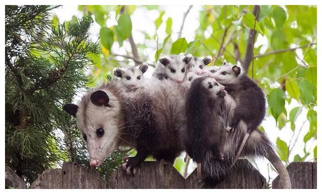 动物界的亲子照:画面相当治愈,最后是企鹅们照顾宝宝方式最奇怪