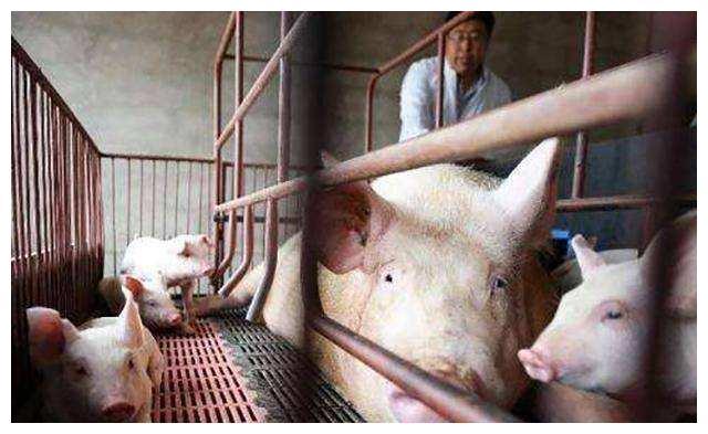 猪价持续大范围上涨,今日继续大涨!2019年10月17日各省猪价行情