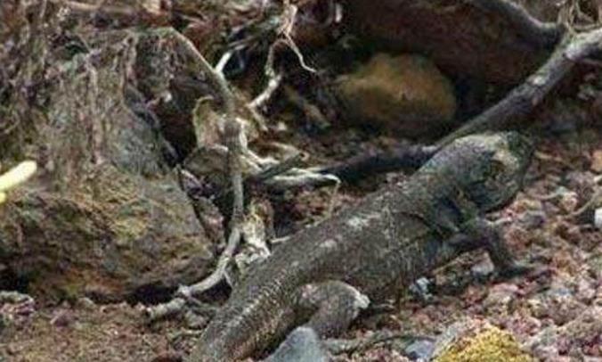 6种灭绝后回归的物种,第4种如今在中国很常见