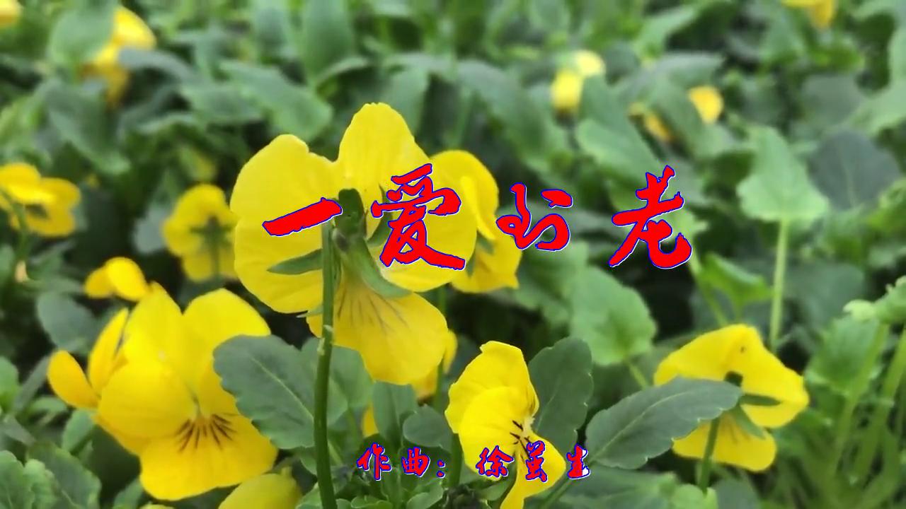 何鹏-东方晴儿的一首《一爱到老》,释放灵魂,洋洋盈耳
