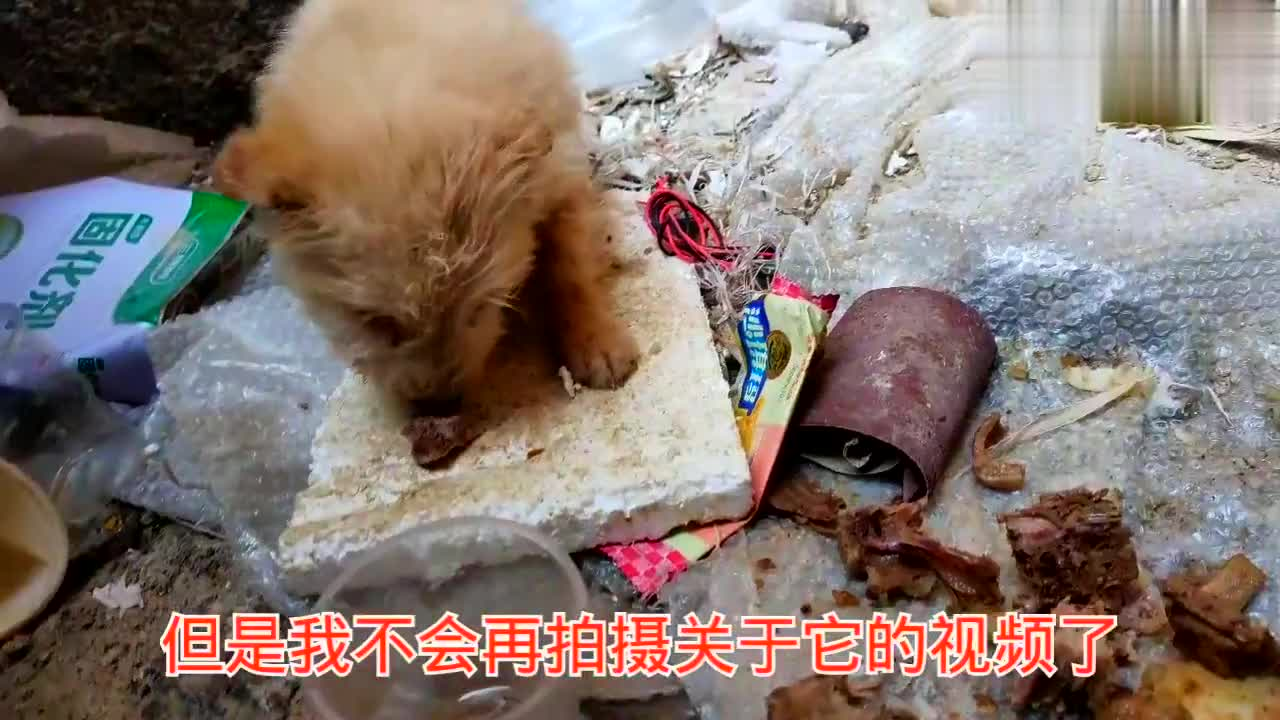 发现了只小奶狗,被关了很久,抱它出来玩显得很胆怯,还有救吗