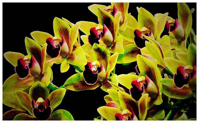 此花花型独特,寓意美好幸福,适合家庭盆栽养护 2019-07-13 19:50:22