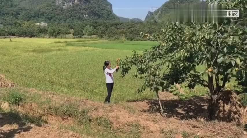 广西24岁单身女孩为何不去打工却甘心留在农村来听她是咋说的