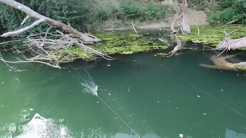 野钓:清澈的河面,看着路亚饵被鱼一口叼住