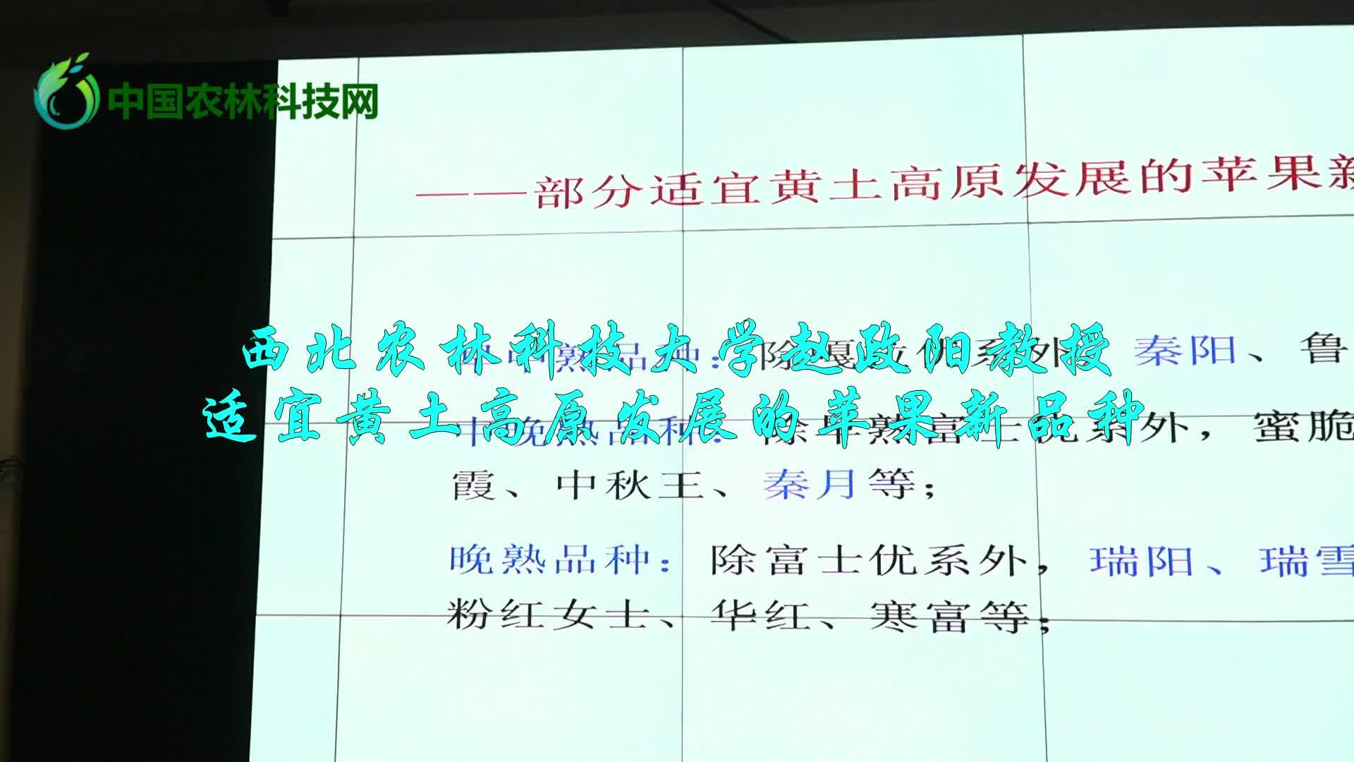西北农林科技大学赵政阳教授适宜黄土高原发展的苹果新品种