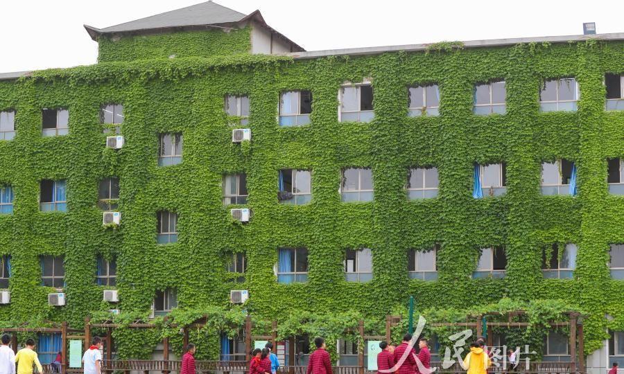"""湖北襄阳:小学教学楼披""""绿装""""成校园最美风景"""