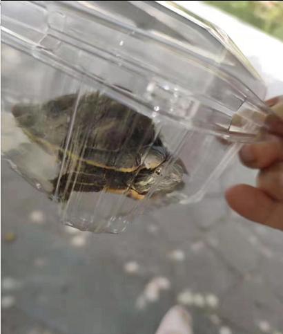 """开学第一天,10后小学生:我的""""小龟""""是全班最大的"""