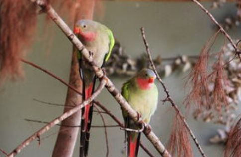 希尔斯维尔野生动物保护区:世界闻名的观赏生活在自然栖息地