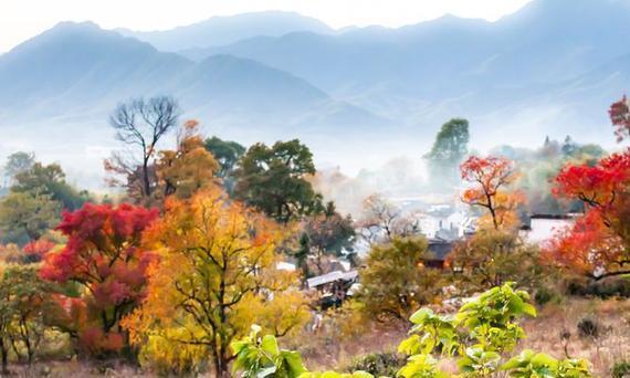 安徽桃源,徽州最美红叶地塔川刚刚美,首发最佳拍摄点,快去打卡